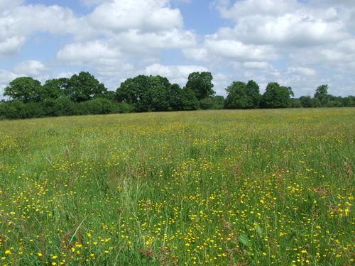 Semez ses prairies, entretenir les naturelles, c'est l'autonomie.